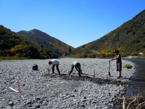 Asse river_2011_Invertebrate study 3